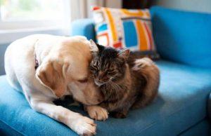 kass ja koer