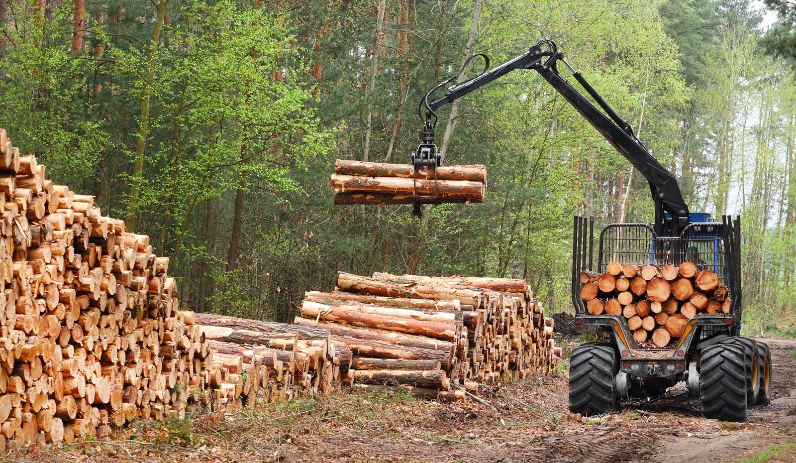 Metsaoksjon.ee aitab metsa müüa